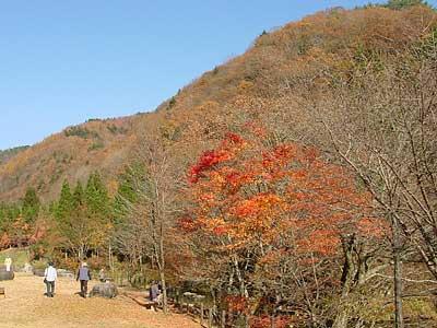 明宝村の紅葉